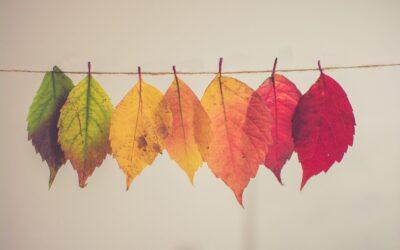 Autumn Leaf Pictures